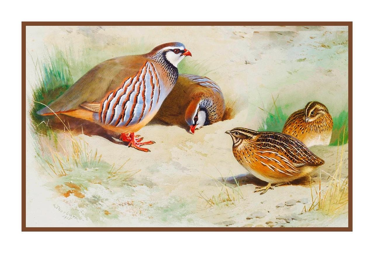 Archibald Thorburn French Partridges Chicks Birds Counted Cross Stitch Pattern