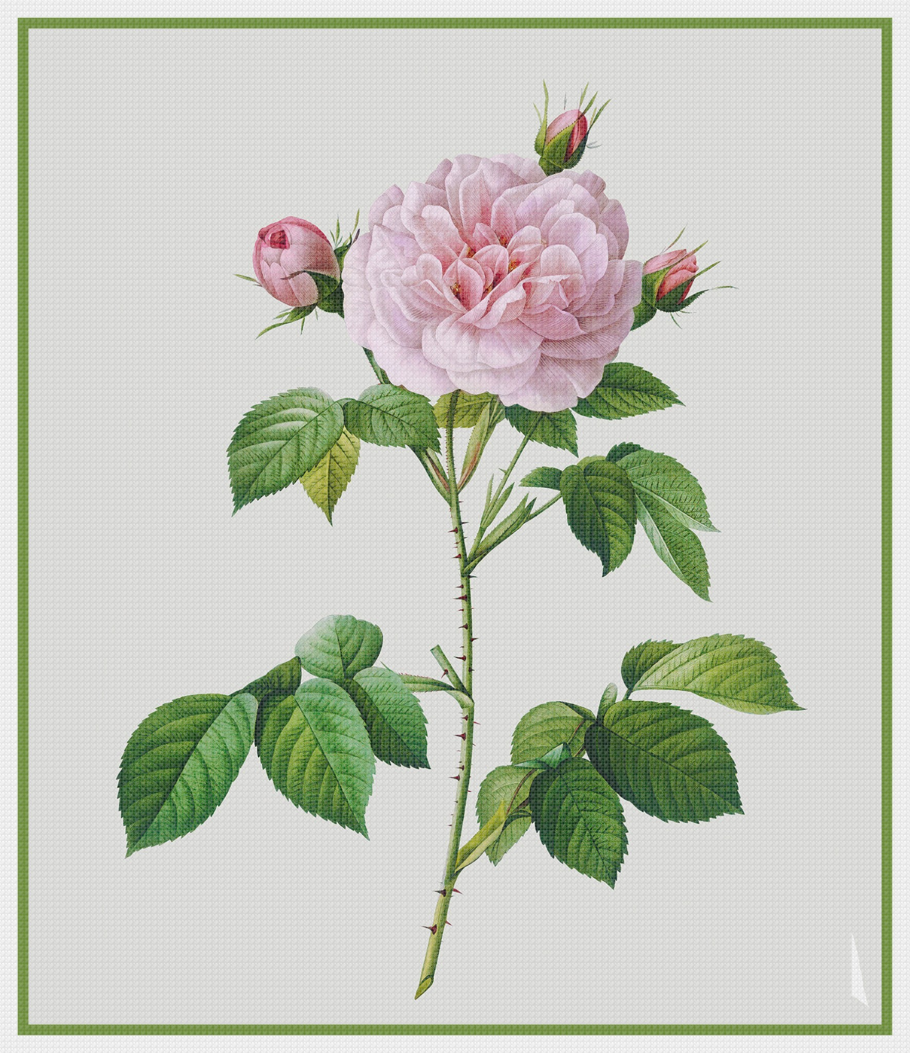 Orenco Originals Pink Rose Flower by Pierre-Joseph Redoute Counted Cross Stitch Pattern