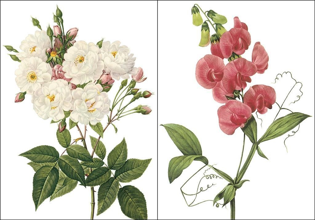 2-Redoute Flowers Sweet Peas and Rose Counted Cross Stitch Chart  Pattern