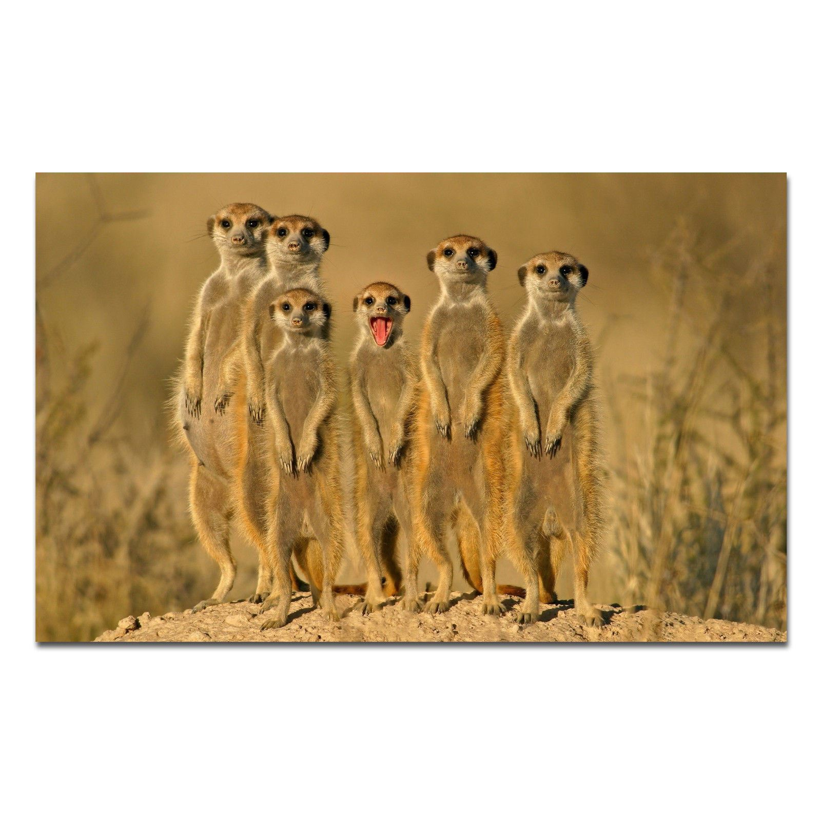 Elephant Kittens Meerkats 5 x Cute Animal Posters A3 Size Puppies Penguins